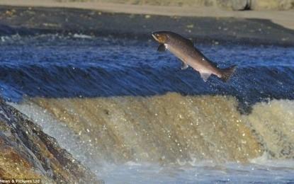 المجلس الحكومي يصادق على مشروع قانون يتعلق بالصيد في المياه البرية