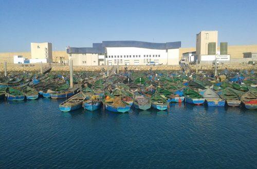 الصيد الثقليدي بميناء بوجدور