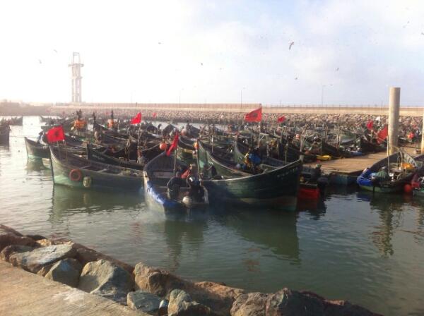 قوارب السويلكات تحمل الأعلام الوطنية
