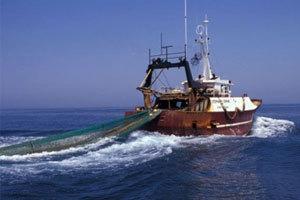 الصيد بالجر1