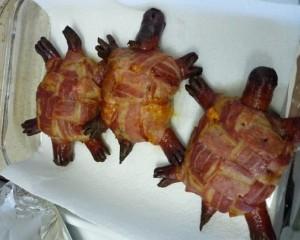 السلاحف شكلت مصدر غداء لإنسان ما قبل التاريخ