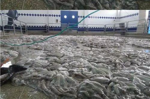 سوق السمك بطرفاية (7)