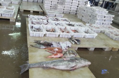 سوق السمك بالعيون