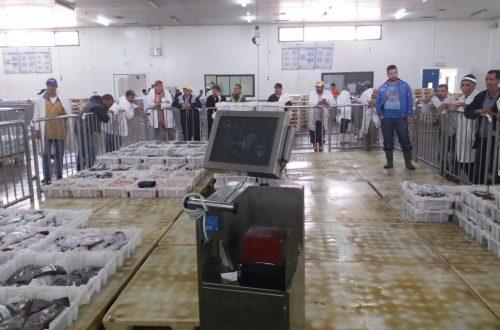 سوق السمك ميناء أكادير (8)