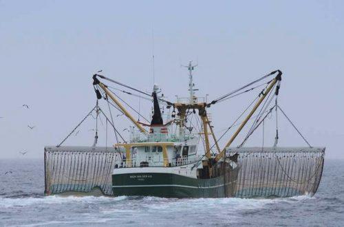 الصيد بالكهرباء