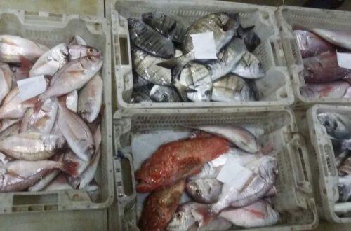 سوق السمك الناظور