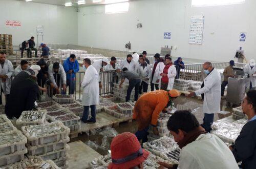 سوق_ السمك_ بالعيون