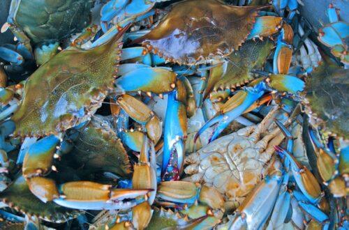 الصورة تقريبية من photorator.com