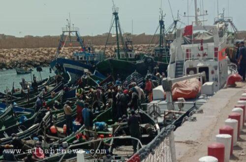 قوارب الصيد التقليدي تصرح بمصطاداتها من الأخطبوط بخافرة الحوز